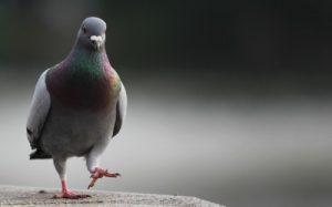 شركة مكافحة طيور بالاحساء